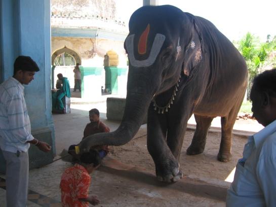 OPPALIAPPAN.Temple_Elephant.